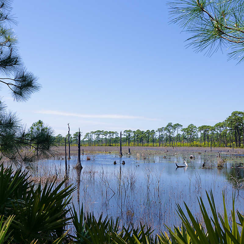 Swamp in Bon Secour National Wildlife Refuge