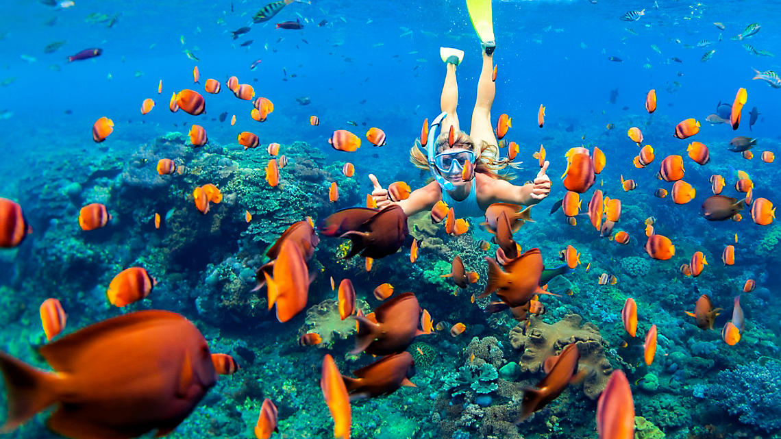 Explore the undersea world along the coral reefs