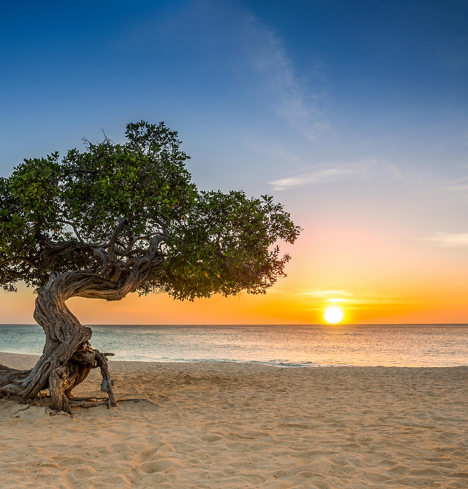 Vacation in Oranjestad Aruba  Bluegreen Vacations