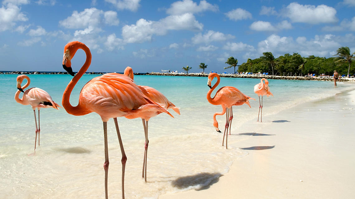 Graceful pink flamingos make the island their home.