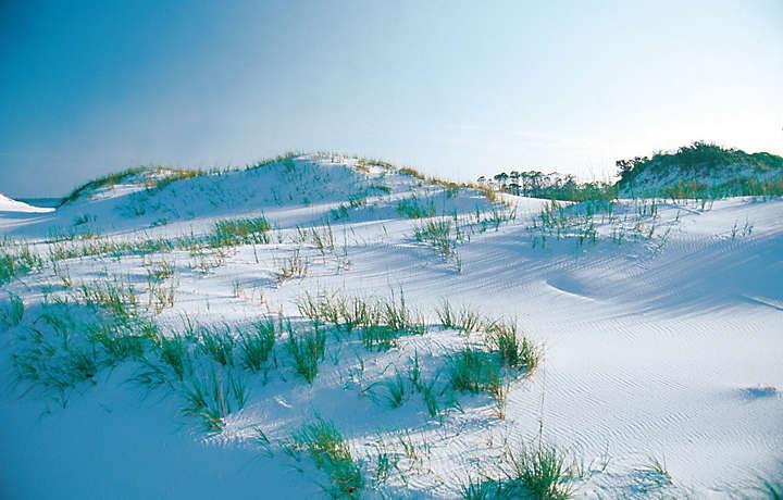 Sand Dune - Shoreline Towers