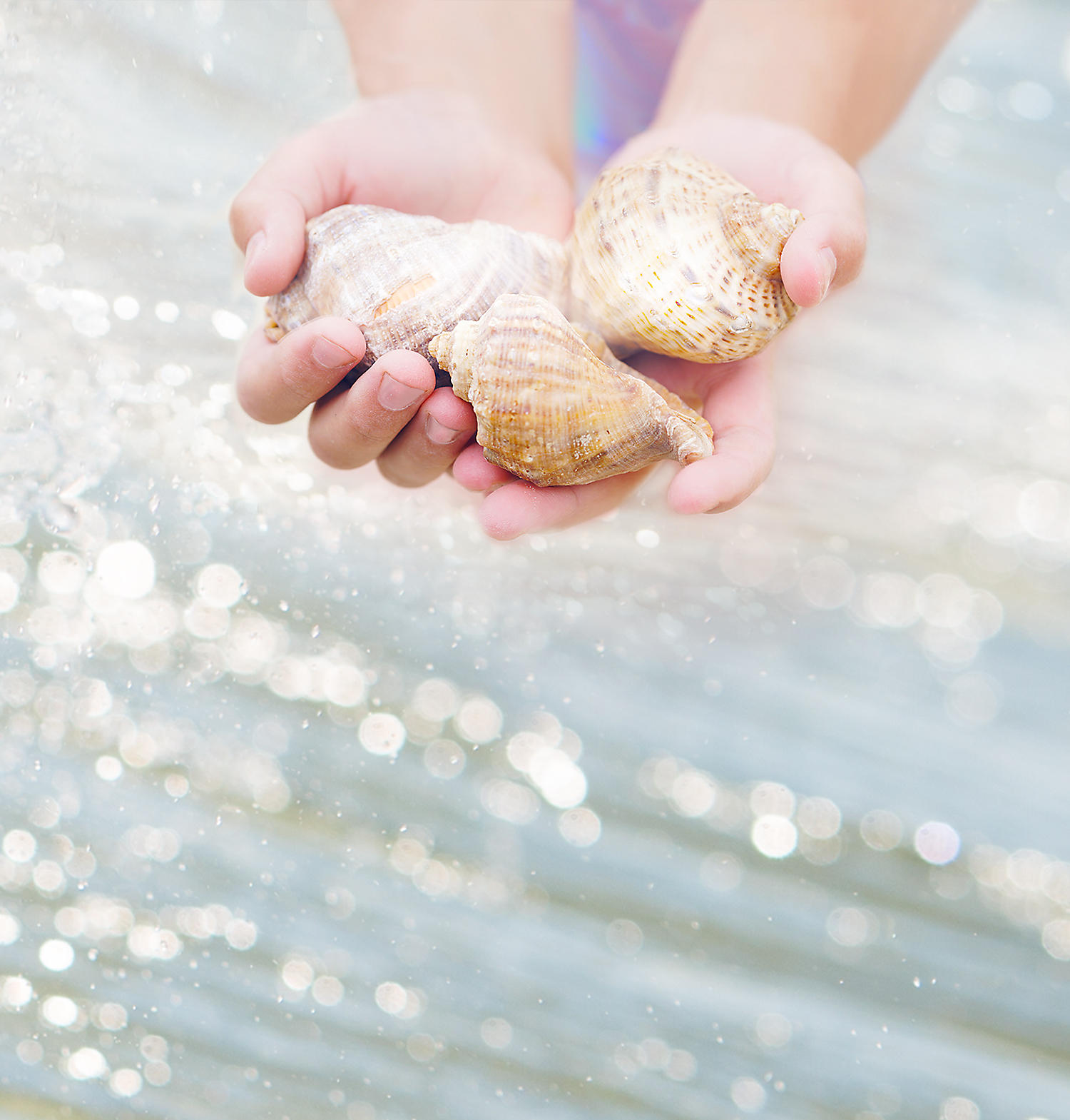 Child holding shells in their hands