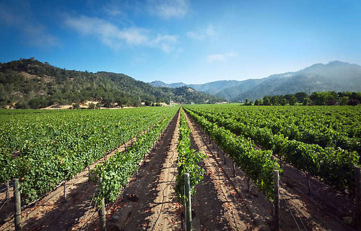 The Vineyards of Big Bear Lake