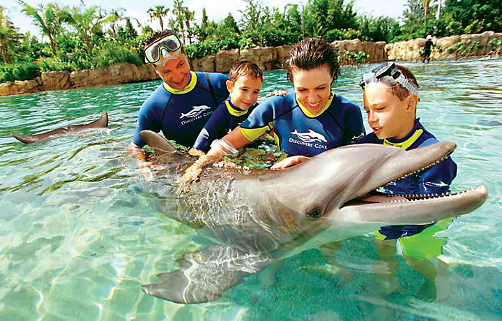 Swim with the Dolphins during your Bluegreen Vacation