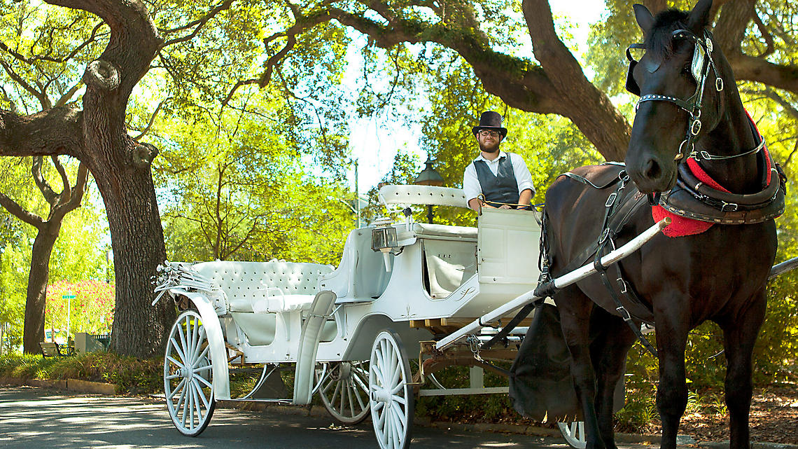 Elegant carriage rides let you tour Savannah's roadways