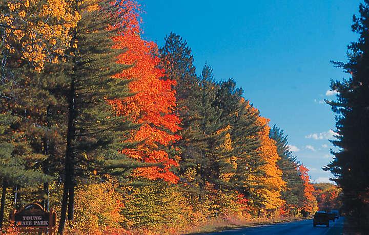 Autumn trees in Michigan