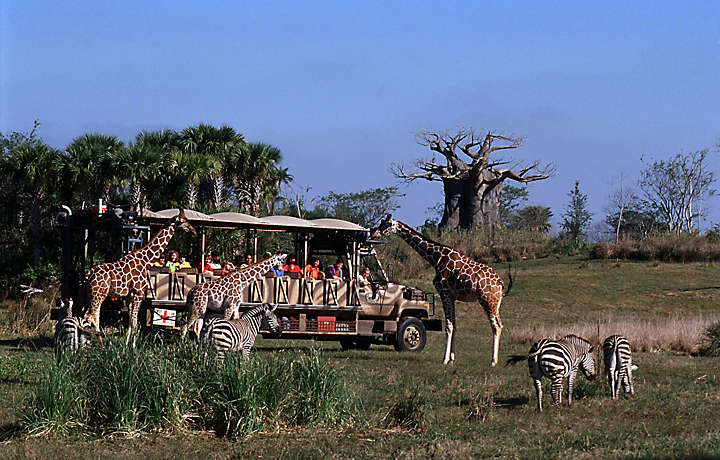 Orlando Animal Safari with Bluegreen Resorts