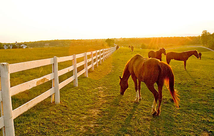 Horse Pasture - Shenandoah Crossing™