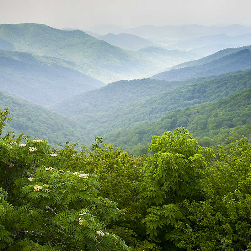 Scenic view of the grassy hilltop of the Smokey Mountains
