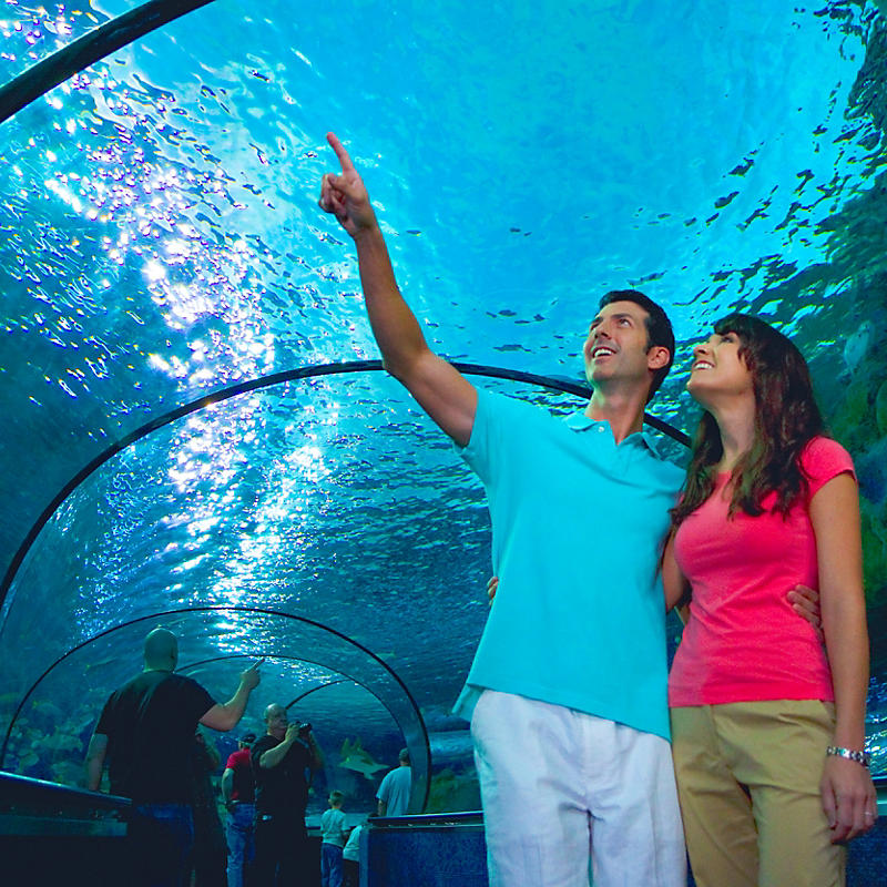 Couple in aquarium tunnel at Myrtle Beach Aquarium